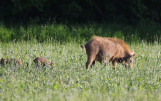 A workshop covering feral hog control methods, hog field dressing and more will take place Saturday, Nov. 16 in Fort Bend County.